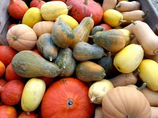 courges Marigny