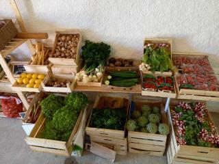 legumes printaniers 2